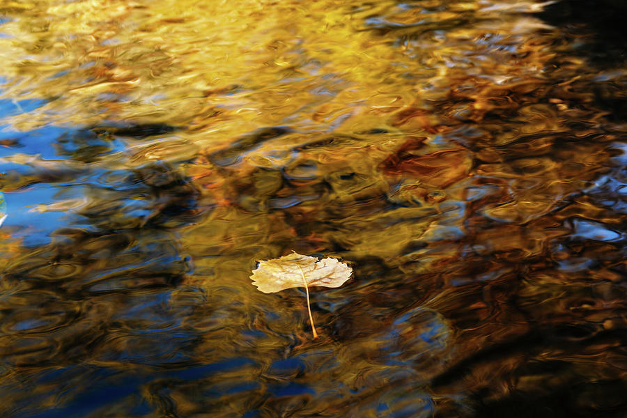 Yellow Aspen Leaf Floating Down A River by Jeanette Fellows