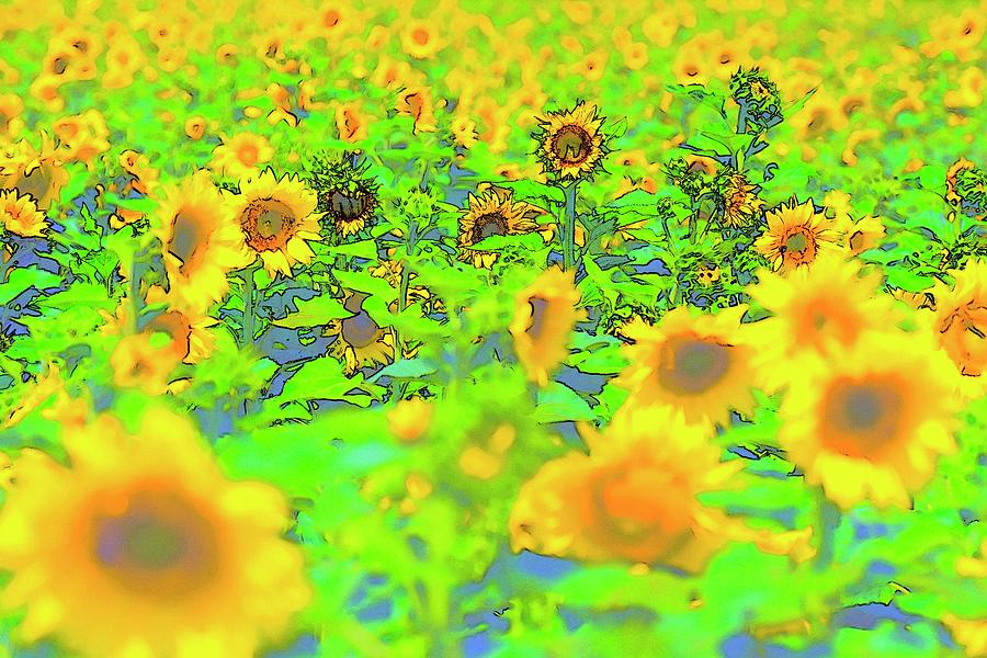 Yellow Blue Green Sunflowers by Jerry Sodorff