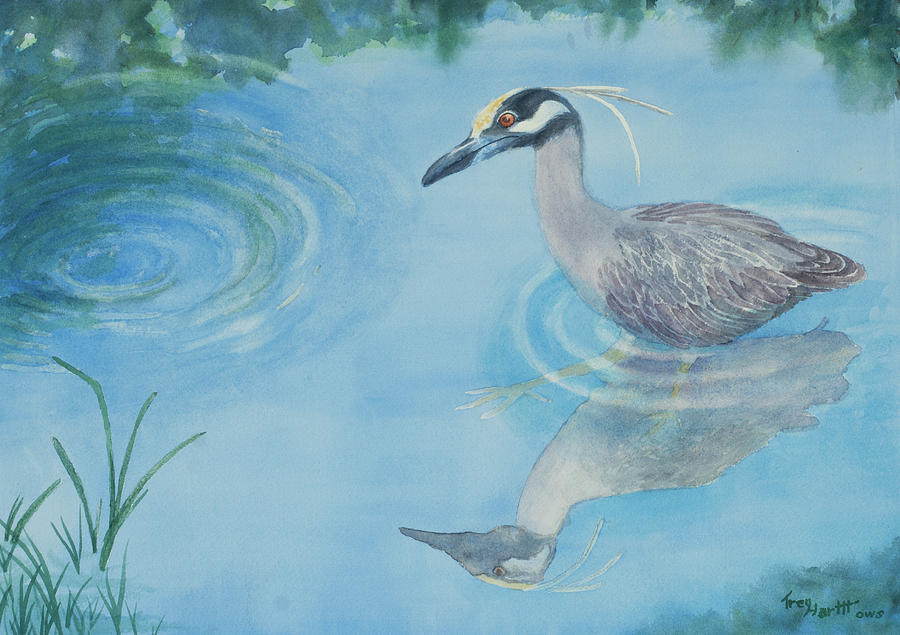 Yellow Crowned Night Heron by George Harth