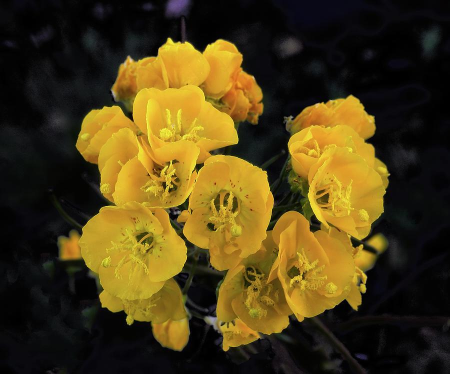 Yellow Desert Bouquet by Paul Breitkreuz