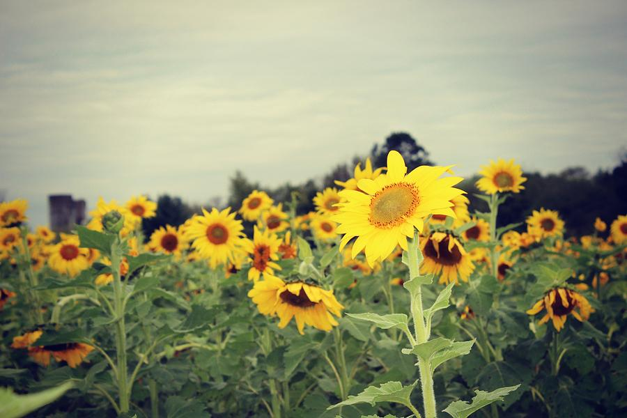 Yellow Photograph - Yellow Fields by Candice Trimble