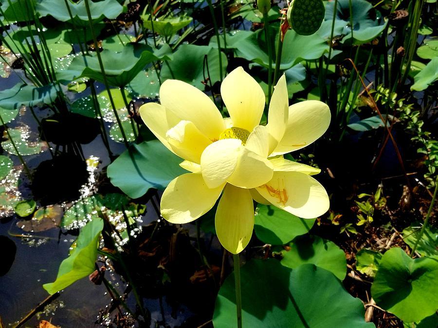 Yellow Flower by Joe Roache