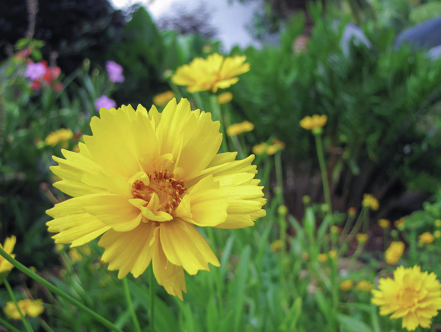 Yellow Flower Springtime by R Scott Duncan