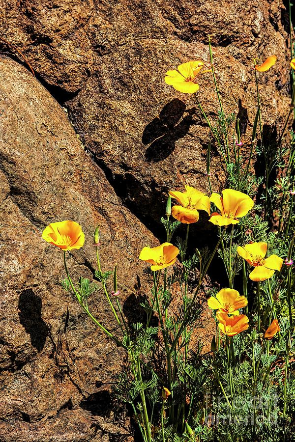 Yellow Flowers with Shadows by Jon Burch Photography