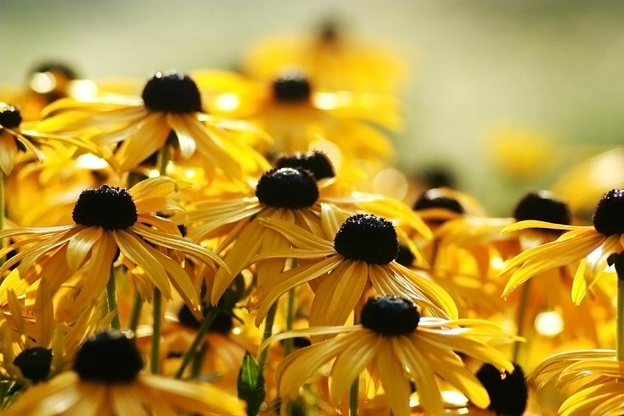 Yellow Glow Photograph by Bob Van Den Berg Photography