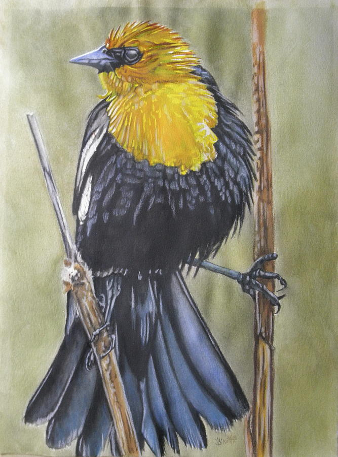 Yellow-Headed Black Bird 7 by Barbara Keith