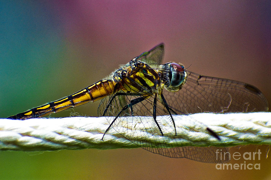Dragonfly by Lita Kelley