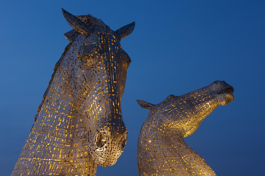 Yellow Kelpies by Stephen Taylor