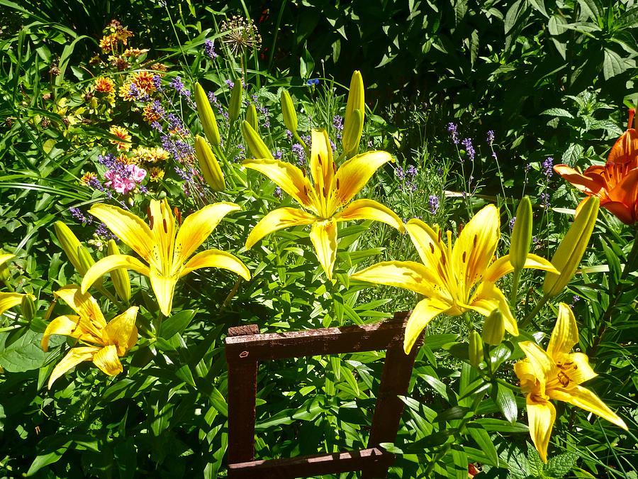 Yellow Lilies by Ellen Paull