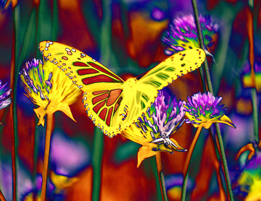 Yellow Monarch Butterfly Photograph