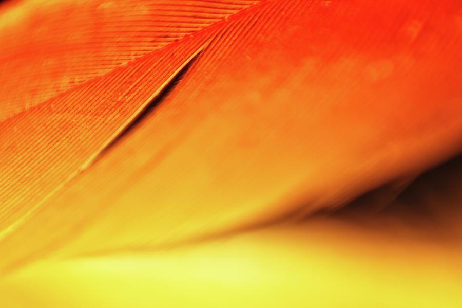Yellow Orange Feather Slit by Lauri Novak
