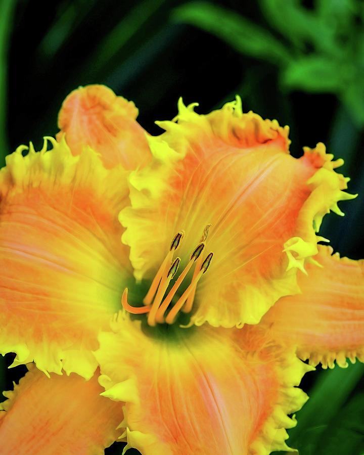 Yellow Photograph - Yellow Pinnacle by Jessica Manelis