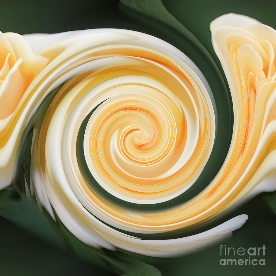 Yellow rose by Agnes Caruso