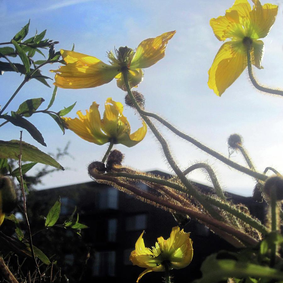 Yellow Sky Flowers 2 by Jaeda DeWalt