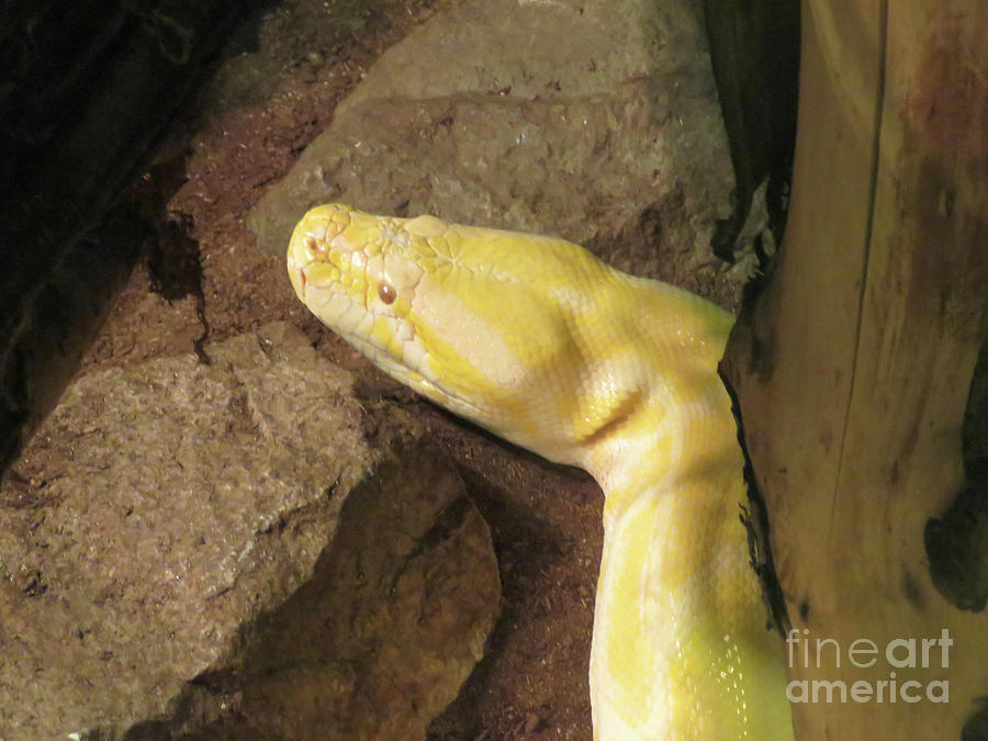 Yellow Snake by Mary Mikawoz