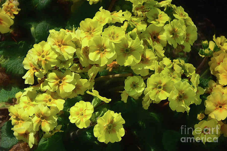 Yellow Spring Flowers by Kaye Menner by Kaye Menner