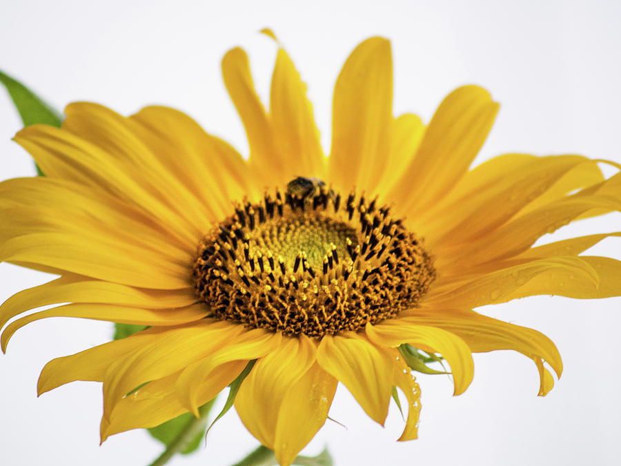 Yellow by Stewart Helberg