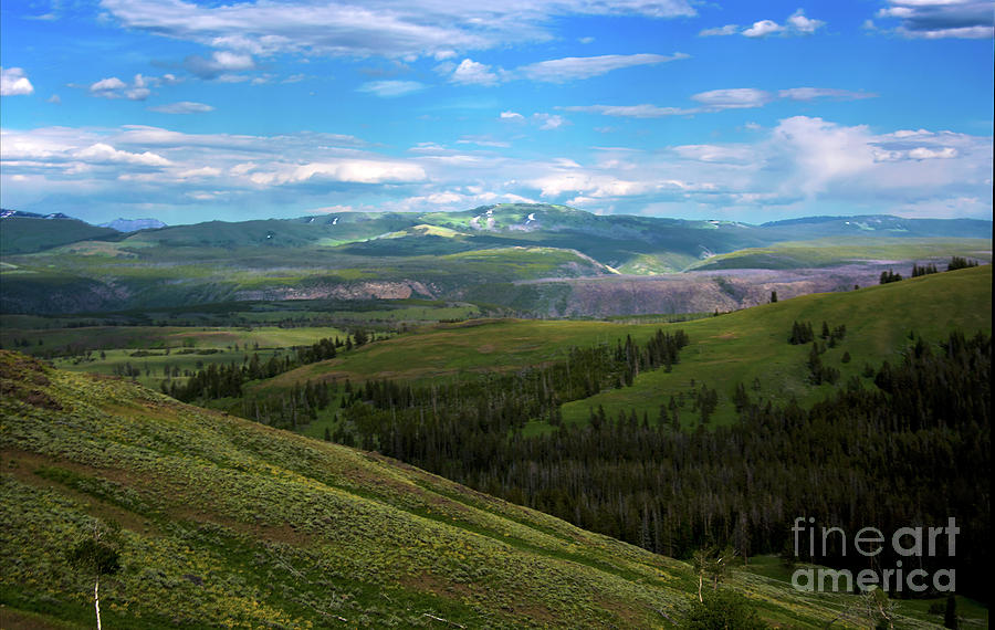 Yellowstone National Park Photograph - Yellow Stone National Park Where Bears Live  by Mae Wertz