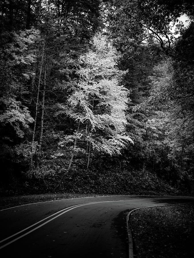 Yellow Tree In The Curve In Black And White Photograph by Chrystal Mimbs