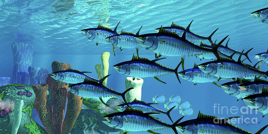 Yellowfin Tuna and Reef by Corey Ford
