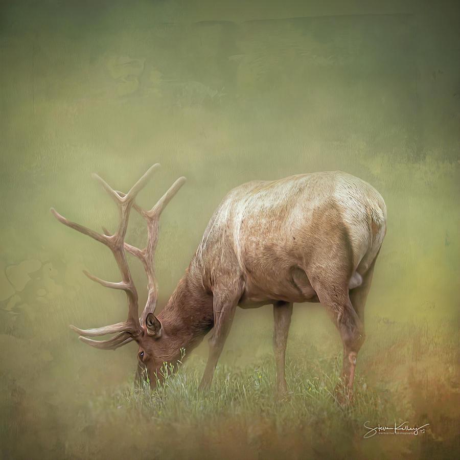 Yellowstone Graze by Steve Kelley