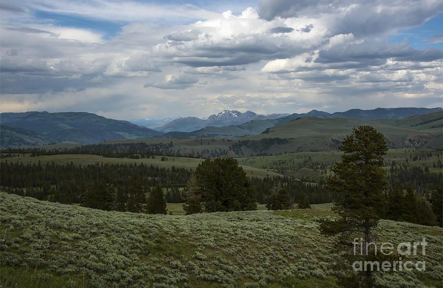 Yellowstone National Park Photograph - Yellowstone National Park by Mae Wertz