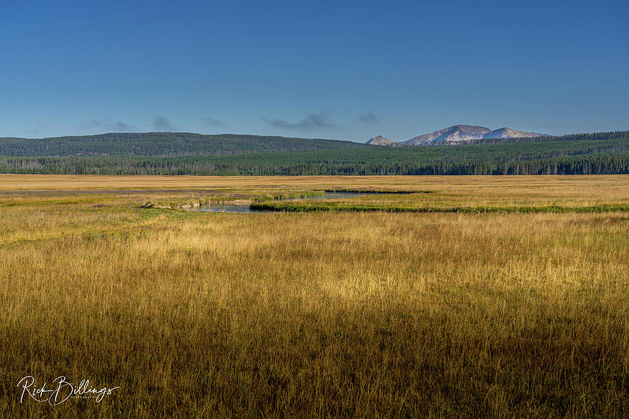 Yellowstone Prairie No 1079 by Rick Billings