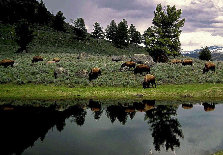 Yellowstone Views Photograph by Image Brought To You Through The Eye Of Andrew Parker