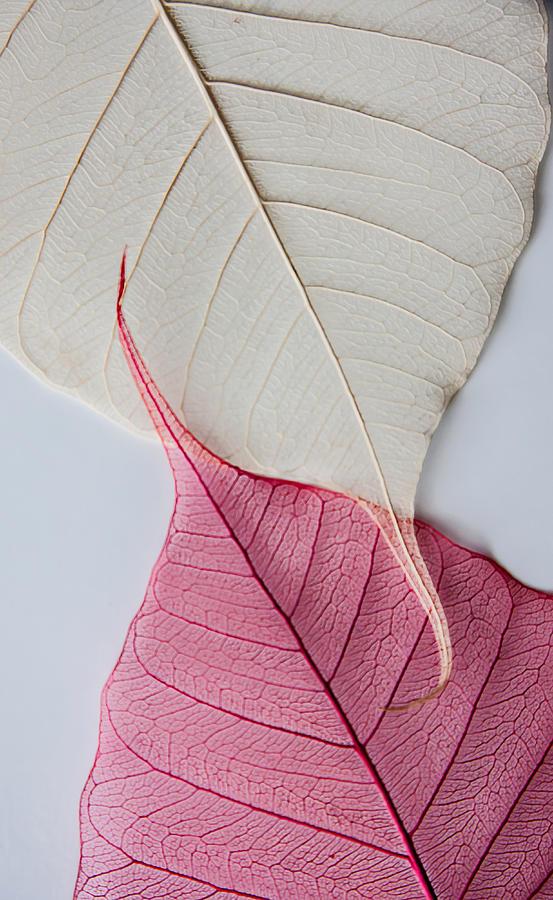 Yin-Yang White Background by Maggie Terlecki