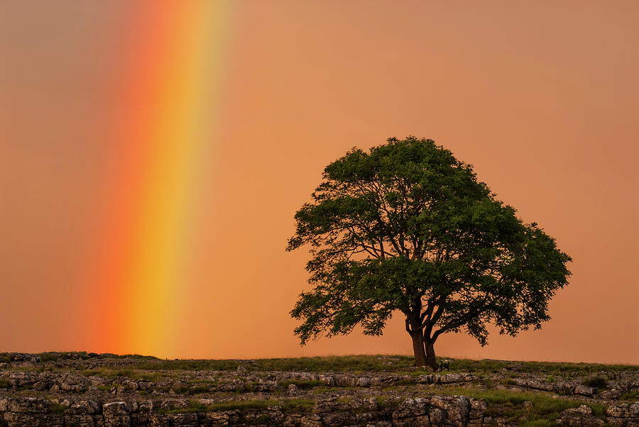 England Photograph - Yorkshire Dales Rainbow by David Ross