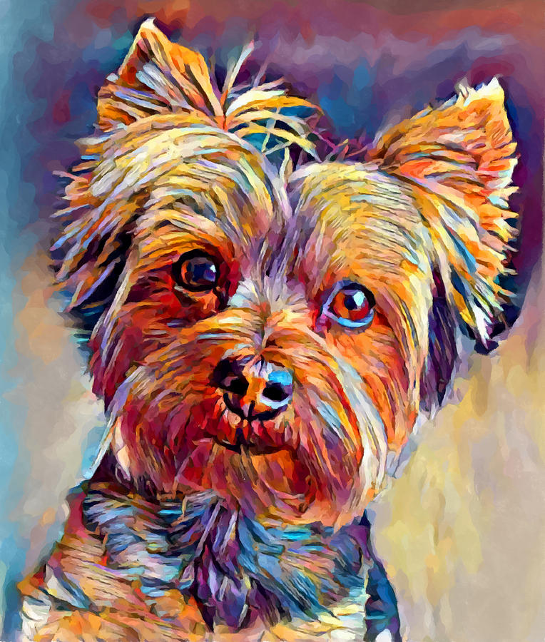 Yorkshire Terrier Painting - Yorkshire Terrier 2 by Chris Butler