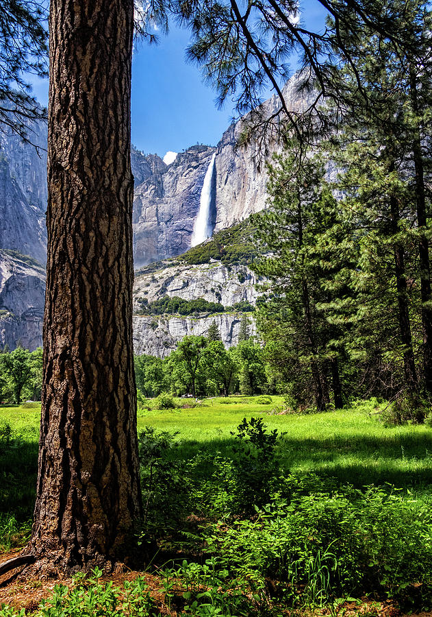 Yosemite Falls through the Woods by Carolyn Derstine