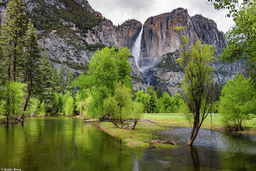 Yosemite National Park by Gaylon Yancy