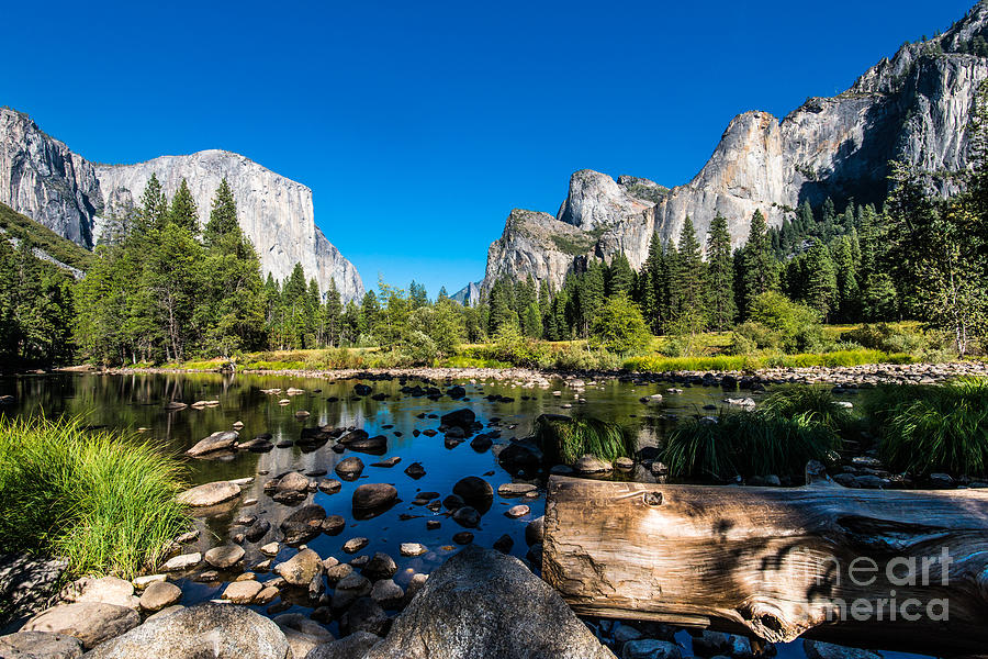 Forest Photograph - Yosemite National Park Mountains by Mikhail Kolesnikov