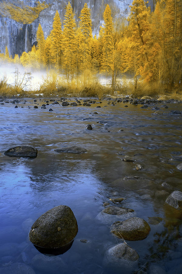 Yosemite Photograph - Yosemite River In Yellow by Jon Glaser