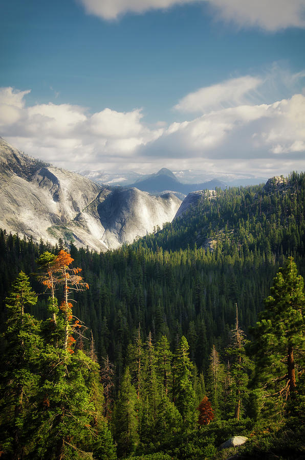 Yosemite Valley forest by RicardMN Photography