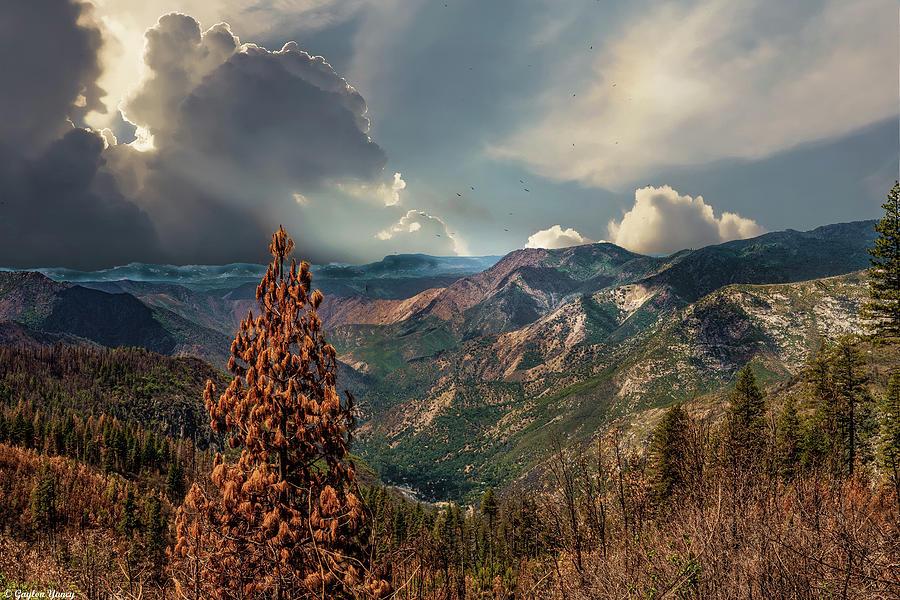 Yosemite Valley by Gaylon Yancy