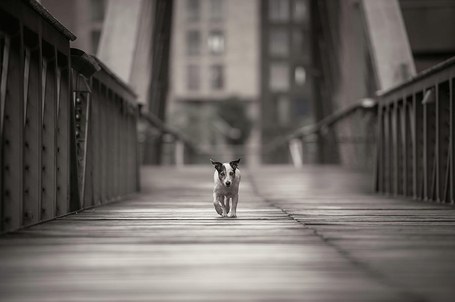 Dogs Photograph - You Can Go Your Own Way... by Heike Willers