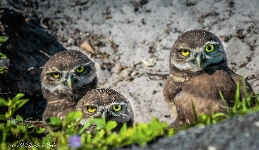 You Looking at US? by Linda Steele