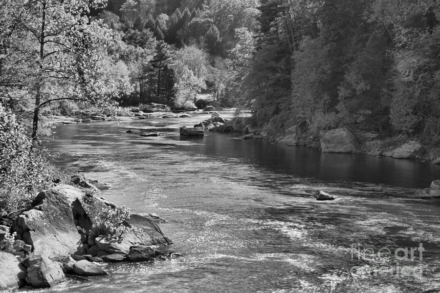 Youghiogheny River Fall Foliage Black And White by Adam Jewell