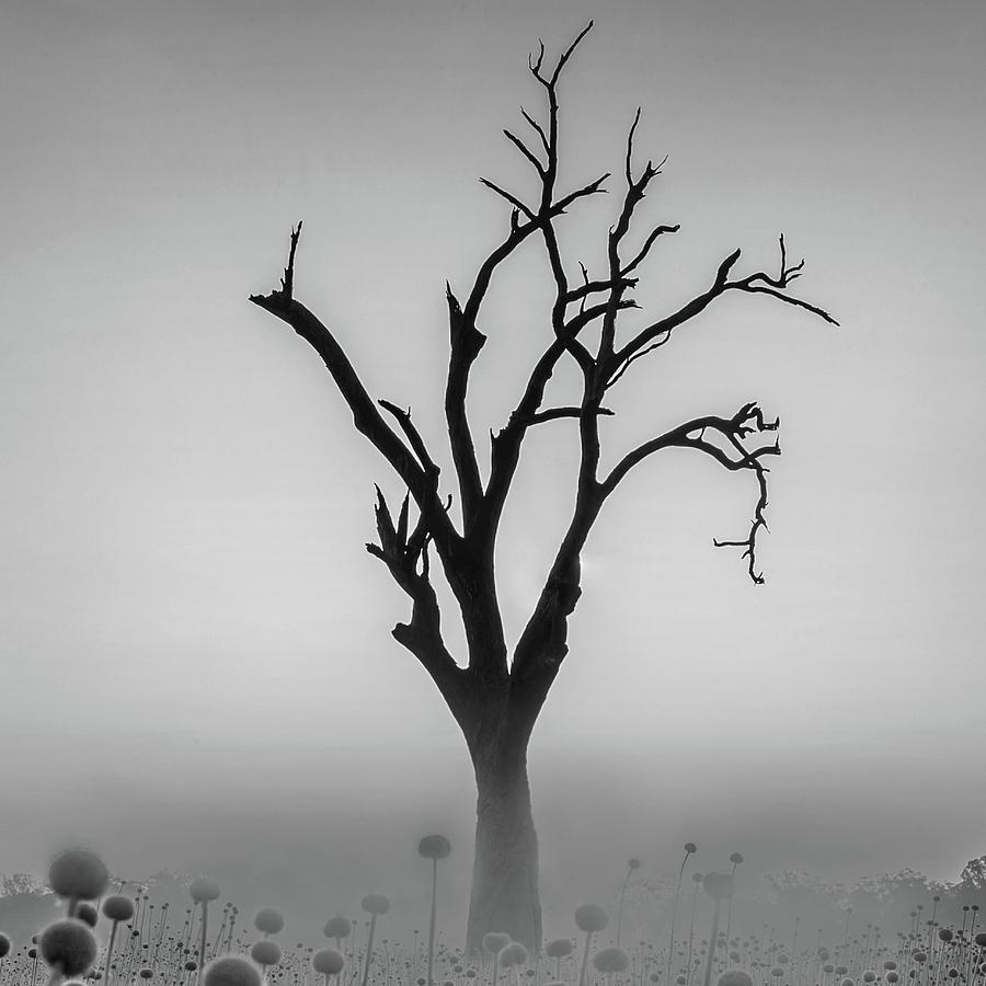 Australia Photograph - Youll Never Walk Alone  by Az Jackson