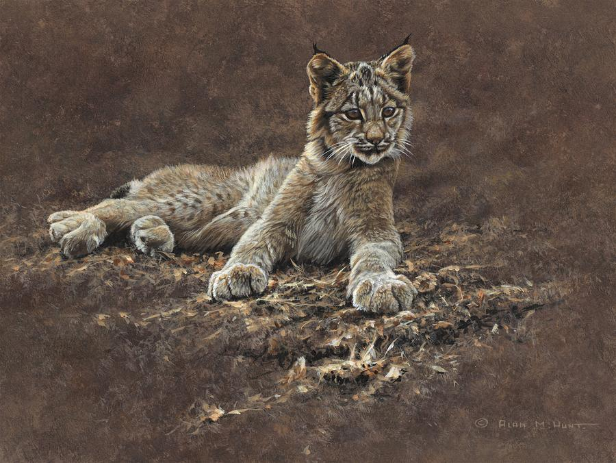 Young Bobcat by Alan M Hunt by Alan M Hunt
