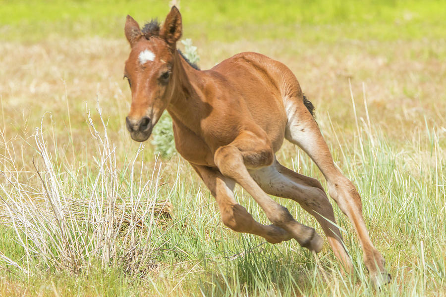 Young Colt on the Run by Marc Crumpler