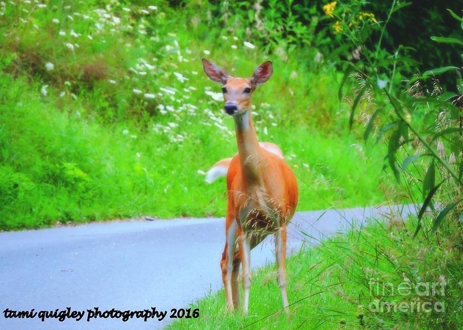 Young Doe Of Summer  by Tami Quigley