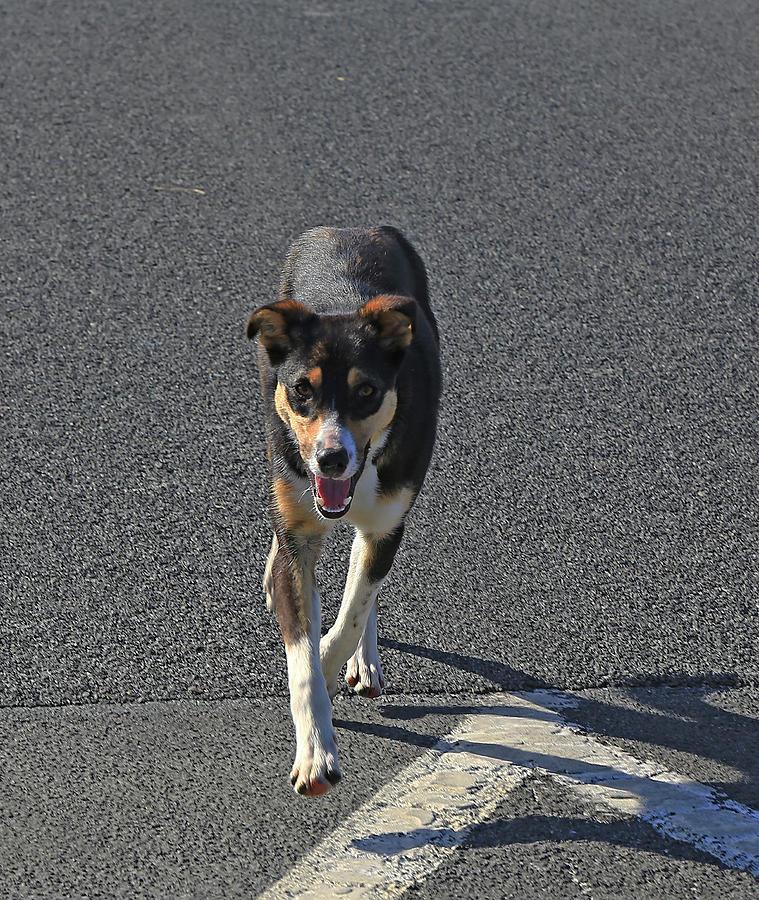 Young Dog by Nareeta Martin
