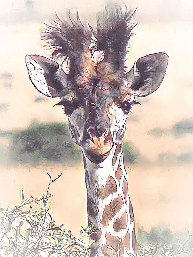 Young Giraffe by Gini Moore
