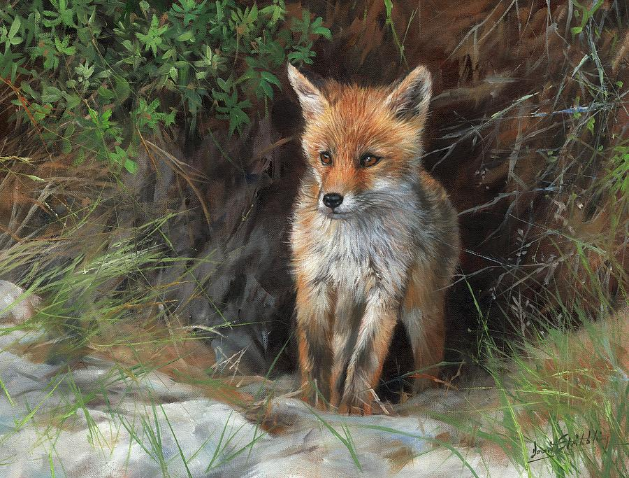 Young Red Fox by David Stribbling
