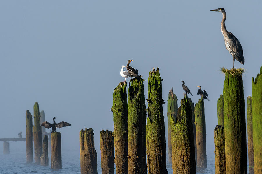 Youngs Bay Pilings by Robert Potts