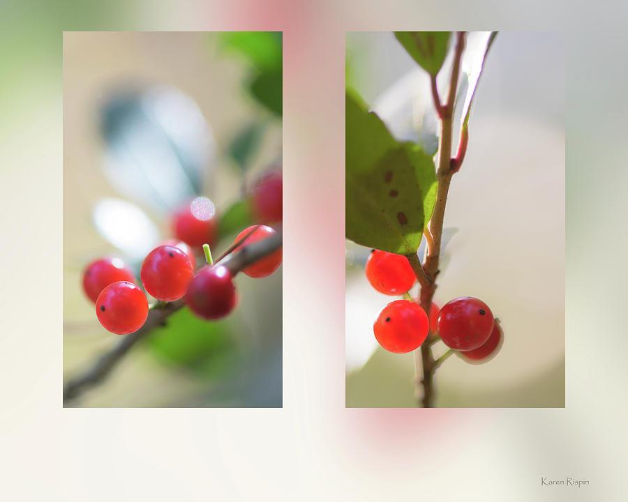 Youpon Holly by Karen Rispin