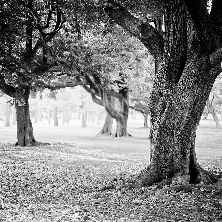 Yoyogi Park, Japan, Tokyo Photograph by H-pom